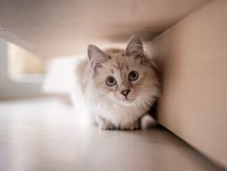 kat-forsikring-katteforsikring-koebstaederne