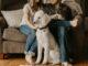 loensikring-koebstaedernes-husdyr